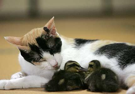 duck_cat
